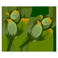 alcachofa de domyfruit