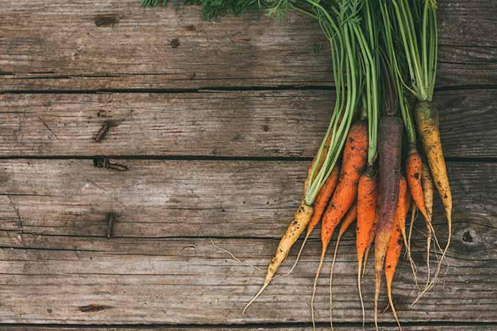 Zanahoria Domyfruit