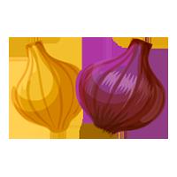 cebolla de domyfruit