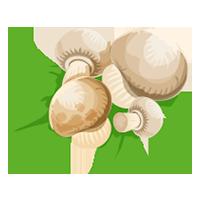 champiñón de domyfruit