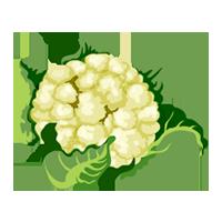 coliflor de domyfruit