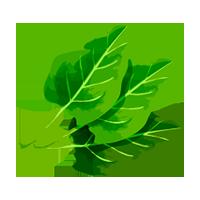 espinacas domyfruit