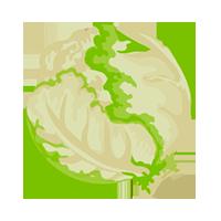 lechuga domyfruit