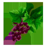 uva de domyfruit